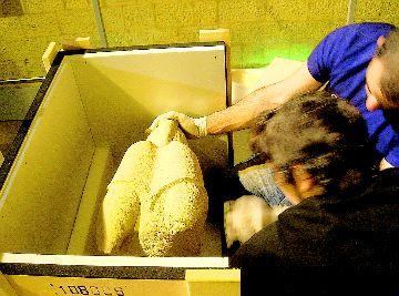 El Museo Provincial presta varias de sus piezas ibéricas