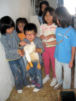 La granja escuela Las Palmeras acoge el VI Encuentro de Familias Adoptantes en China
